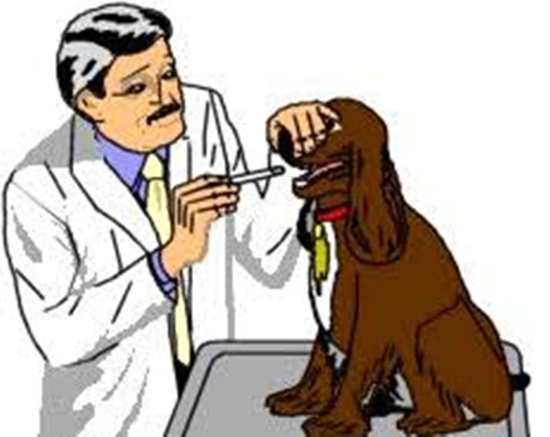 7100 Koleksi Gambar Ilustrasi Dokter Hewan Terbaik